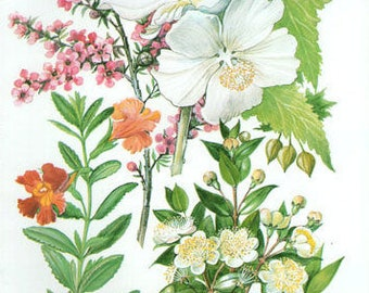 Vintage Botanical Print Antique FLOWERS, plant print botanical print, bookplate 103 art print, pink white plants plant wall