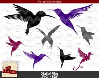 Humming Bird Humingbird SVG File