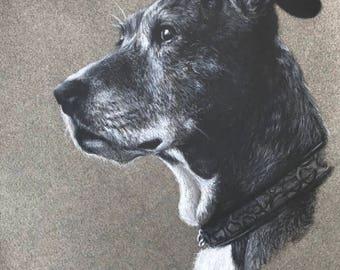 Fur Baby/Pet Portrait Drawing, Charcoal