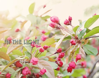 Spring Blossoms 2 - fine art photography