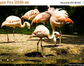 5 Flamingos
