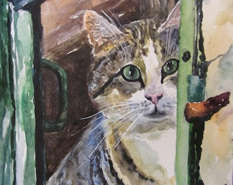 Alley cat in the window