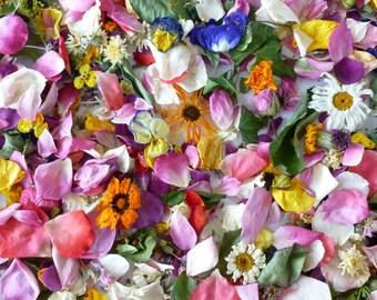 Dried Flowers, Wedding Confetti, Biodegradable, Petal Confetti, Bulk Petals, Flower Girl, Centerpieces, Table Decor, 24 Boxes or Bags