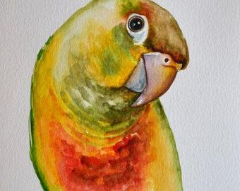 Conure original watercolor painting