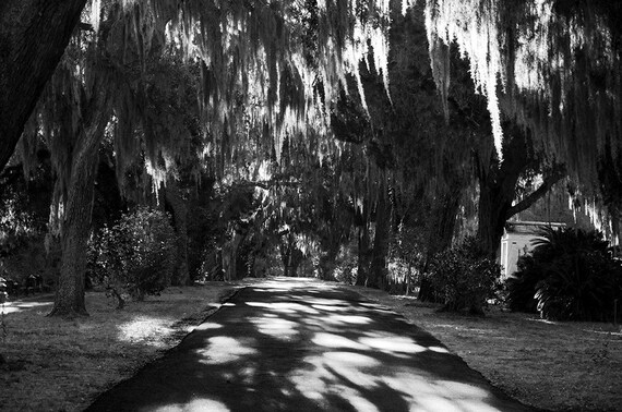 Bonaventure Cemetery Savannah Georgia Black and White Photograph of Spanish Moss and Live Oak Trees