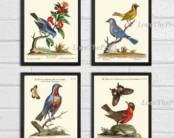 Bird Print Set of 4 Art  Antique Beautiful Blue Red Birds Butterfly Book Plate Illustration Living Room Bedroom Home Room Wall Decor