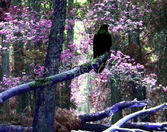 MYSTICAL RAVEN FOREST Surreal Fantasy Photo Twilight Art Print Pink Lavender Purple Black Raven Crow Trees Colorful Forest Choose Size