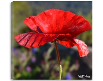 Red Poppy, Floral photography, Digital Download, Red Flower