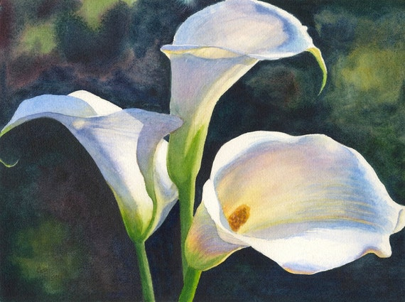 Calla Lilies Watercolor Painting Print By Cathy Hillegas
