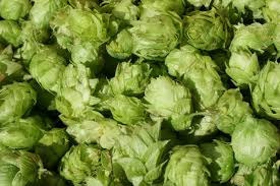 Fresh AMARILLO Leaf Hops  For Making Home Brewed Craft Beer 1 oz Package