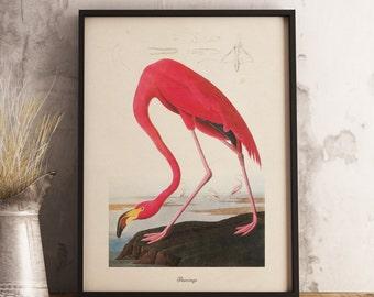 Flamingo Print:INSTANT DIGITAL DOWNLOAD Bird print, Antique Bird Painting