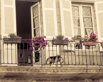 LIBOURNE Photography, FRENCH Beagle on a Balcony, FRANCE travel print, Europe, European, dog, pet, animal