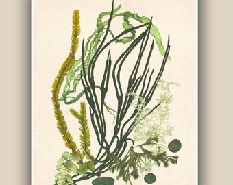 Seaweed Artwork Print, Pressed seaweed Art, Marine Wall Decor, Sea Grass Ocean, seaweed art,  Nautical art