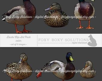 Color Ducks: Clip Art, set of 6 images