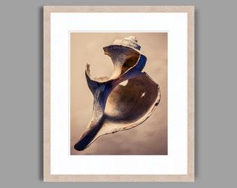 SEASHELL #8 - Framed Art Photography, Home Decor, Wall Art, Nature, beach, seashells, ocean
