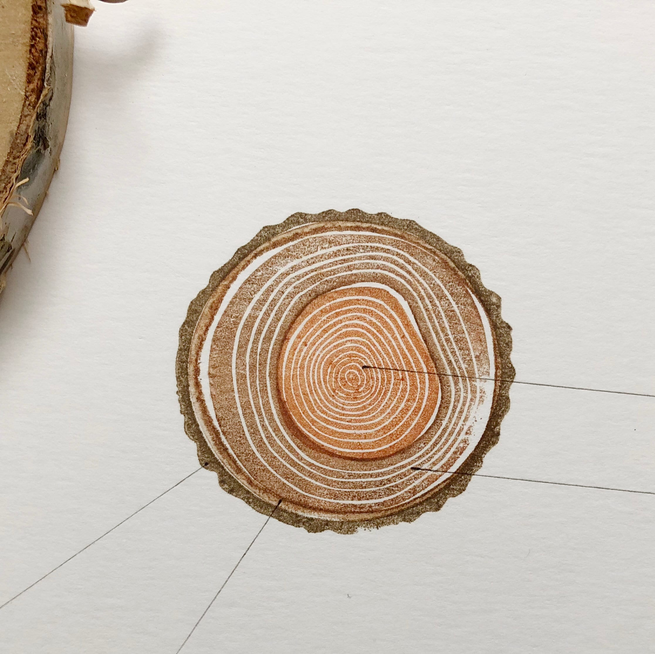 Anatomy Of A Tree Tree Rings Stamp Set Hand Carved Rubber Stamp