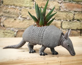 Norman the planted armadillo