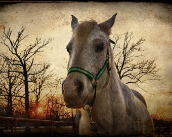 Horse Decor, Horse Art, Nature Decor, Home Decor, Large Wall Art, Country Decor, Horse at Sunset