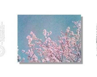 Branches de cerisier en fleurs rose rose fleurs roses fleurs de cerisier bleu ciel. Finition minable Cottage Vintage Chic. Signé Photo Art
