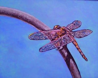 dragonfly insect garden