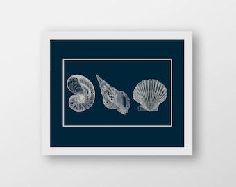 Shells Nautical Art Print - Nautical Decor - Wall Art - Sea Life Decor - Sailing Art