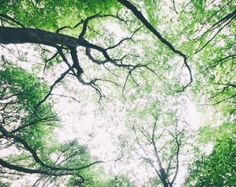 Canopy, Trees, Nature Photography, Woodland Landscape, Wall Art, Home Decor
