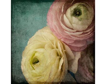 Floral Art Print, Pink Ranunculus Print, Shabby Chic Decor, Flower Photography, Flower Wall Art