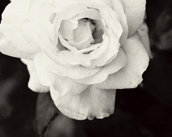 Black and white Photography monochromatic nature macro Spring Rose romantic home decor for her women dark flower wedding under 50 - Fine Art