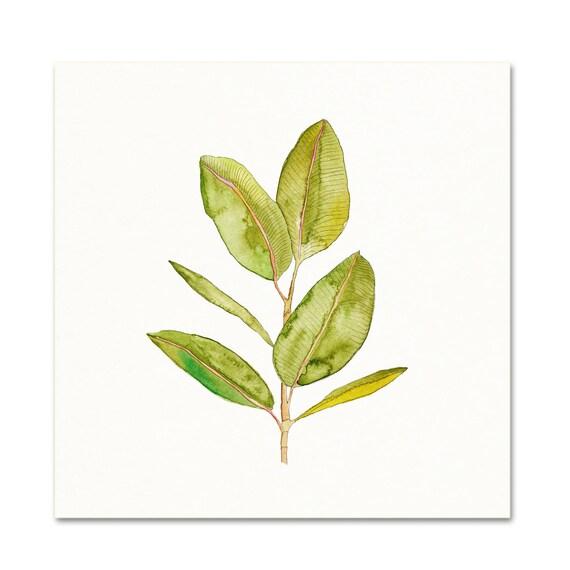 Watercolor Rubber Plant Wall Art. Rubber Plant Art Print.