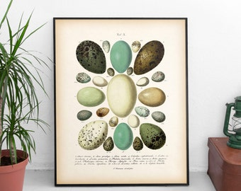 Egg print, Egg art, Egg illustration, Vintage print, Instant download antique print, Wall art vintage, Printable egg print, 8x10, 11x14, JPG