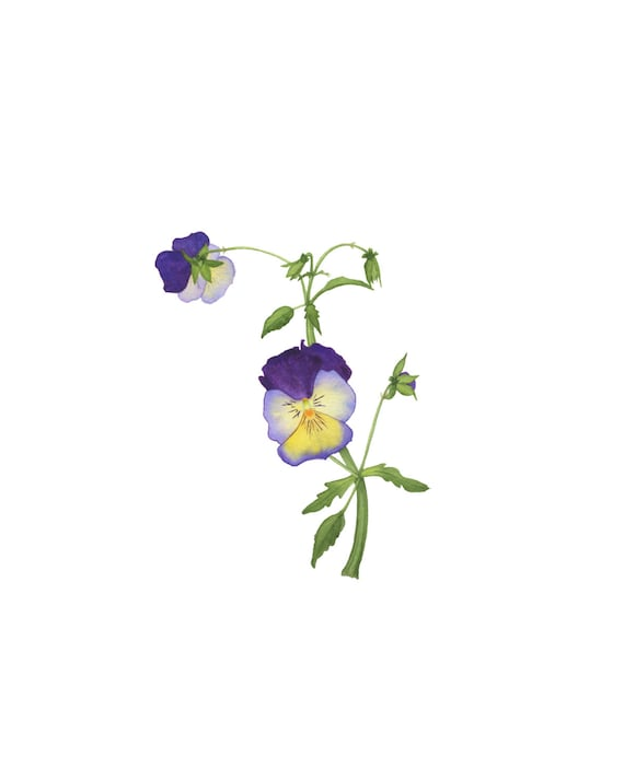 Image result for stylized pansies