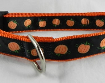 Fall Pumpkin Dog Collar