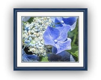 Blue Lacecap Hydrangea Cottage Chic Garden Flowers Blue White Floral Fine Art Photography Print