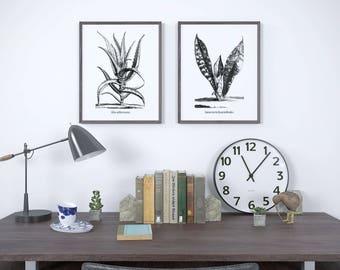 Black and white print, Succulent print, Aloe print, Sansevieria, Succulent art, Black and white art print, Set of 2 vintage prints, JPG