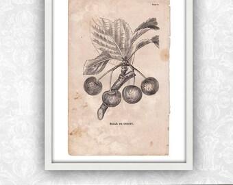 Cherry Print / Plant Art / Fruit Print / Book Page / Engraving Wall Art / Digital Instant Download / Antique Print / Victorian Art Print