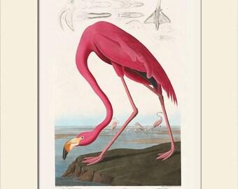 Audubon Bird Art Print, American Pink Flamingo, Matted Art Print, Note Card, Wall Decor, Natural History, Vintage Bird Print, Wall Art