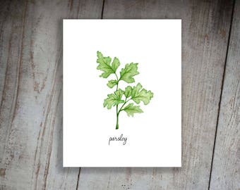 Parsley Watercolor Illustration Art Print Kitchen Herbs Kitchen Sign, Wall Decor
