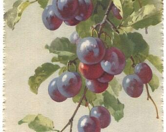 Vintage Postcard - Catherine Klein - Grapes - Postcard Series 1291