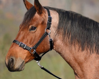 Draft Horse Size** HALTER AND LEAD, Leather Buckle Nose Halter