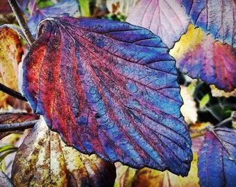 Autumn's Dark Mystery