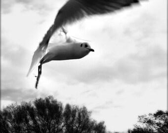 bird, a photograph