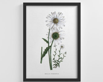 White Wild Daisy Flower Floral Frameless Poster Nature Art Print Stylish Home Decoration Wall Art Nursery Decor Living Room | IC106