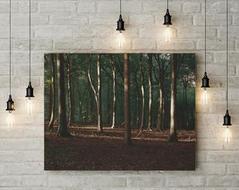 Sunlit Forest Print Photo Printable Forest Landscape Print Instant Download Nature Print Office Decor Modern Wall Art Downloadable Print