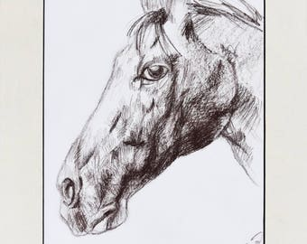 Horse head chalk drawing