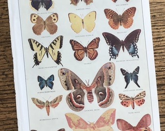 Butterflies and Moths Vintage Original Insect Small Frame Worthy Illustrated Book Page
