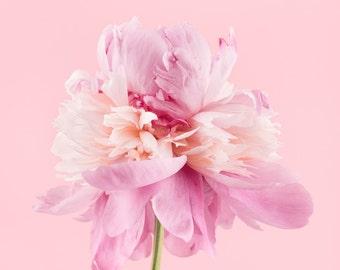 pink peony flower photography print, Wall Decor, Flower Wall Art, Floral, Home Decor, Fine Art Photography Print