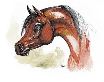Bay arabian horse original pen and watercolor  painting