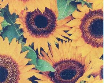 Sunflowers, Nature's Portraits, Carlton Cards, Unused Blank Greeting Card, good shape, Vintage