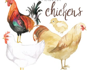 Watercolor Chickens Clip Art, Rooster clipart, Poultry Illustration, Urban Farming, Trendy Clipart