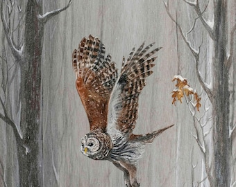 Barred Owl Among Oaks